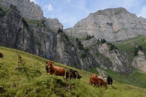 Alp-Tschingla-2019-013